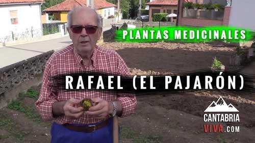 plantas medicinales cantabria